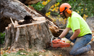 tree stump removal san antonio